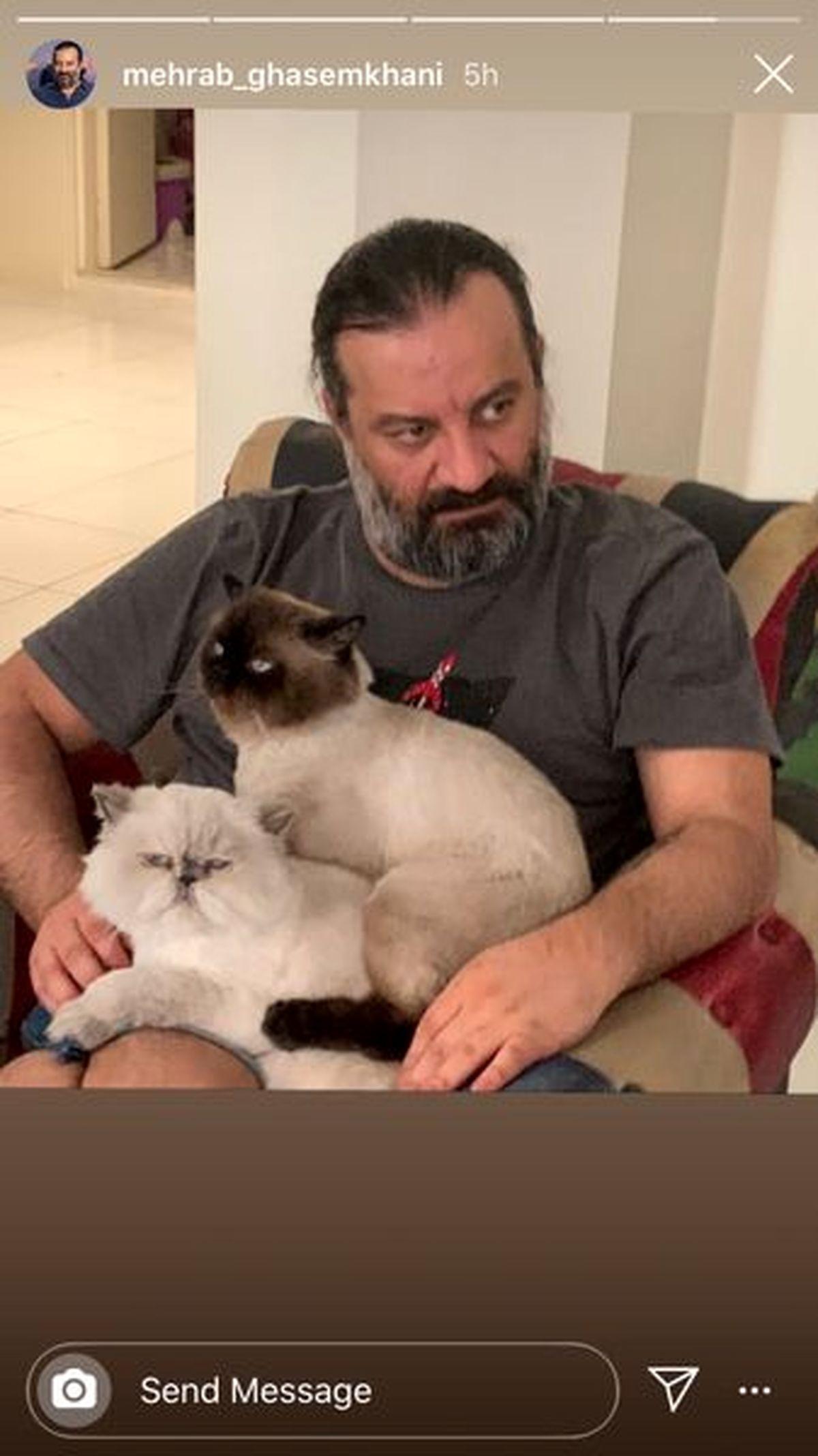 عکسی مهراب قاسمخانی و گربه هایش در خانه+عکس